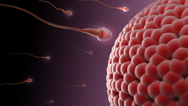 Your Sperm Are Ticking, Mutating Time Bombs