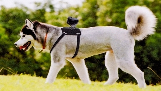 Man's Best Friend Gets Its Own Action Cam Mount Courtesy Of Sony