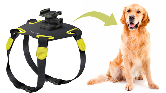 Click here to read Man's Best Friend Gets Its Own Action Cam Mount Courtesy Of Sony