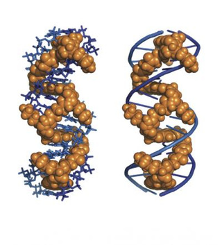 DNA-tangling molecule could revolutionize treatments for cancer and HIV