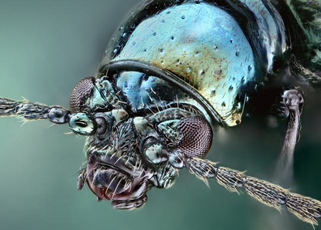 Some of the Most Gorgeous Macrophotography We've Seen in Ages