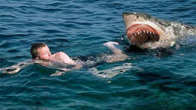 Those Speedo Fastskins still won't let you outrun a hungry shark