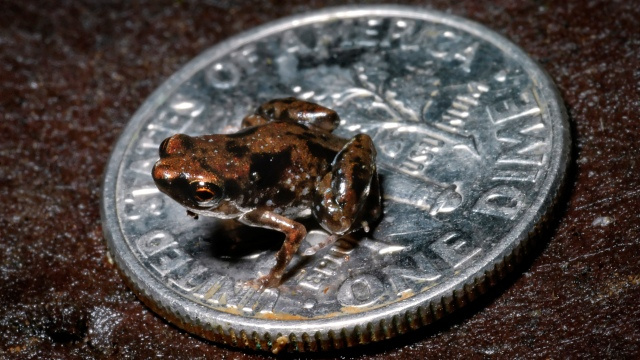 Look at the world's tiniest vertebrate