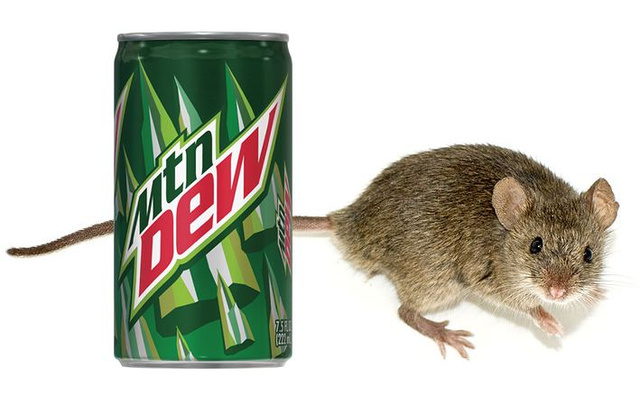 Can Mountain Dew really dissolve a mouse carcass?