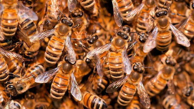 Bee swarms behave just like neurons in the human brain