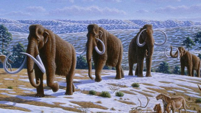No, we won't be able to clone a woolly mammoth in the next five years