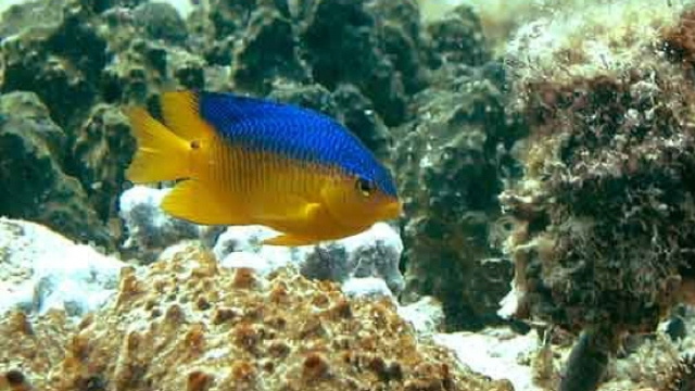 Tropical fish can adjust to warming oceans, which could bode well for the future