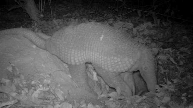 Say hello to one of the world's most mysterious animals