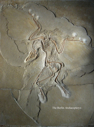 Earliest bird was not a bird? New fossil muddles the Archaeopteryx story