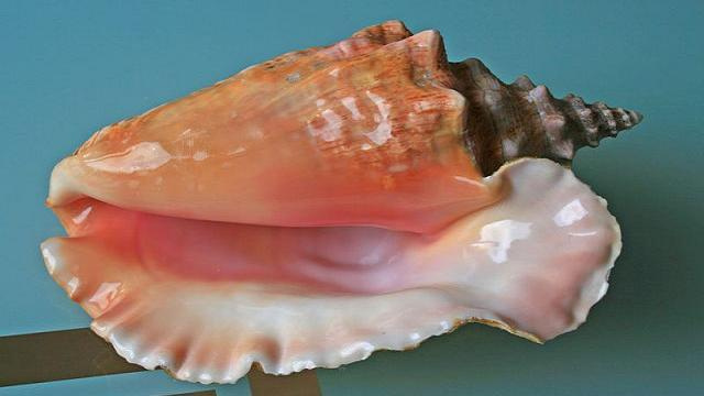 Why no one hears the ocean in a sea shell