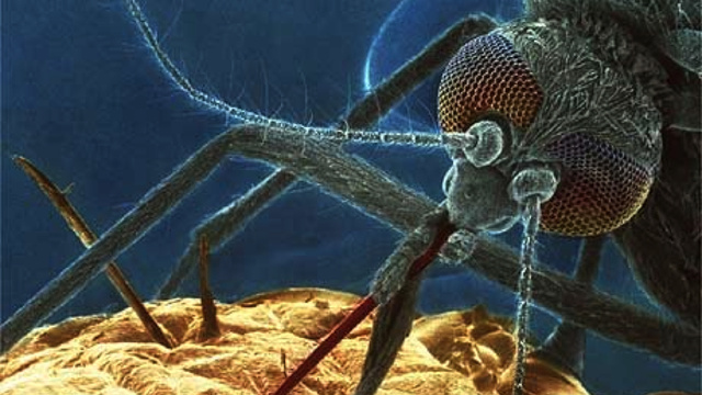 How to destroy mosquitoes by giving them superpowers