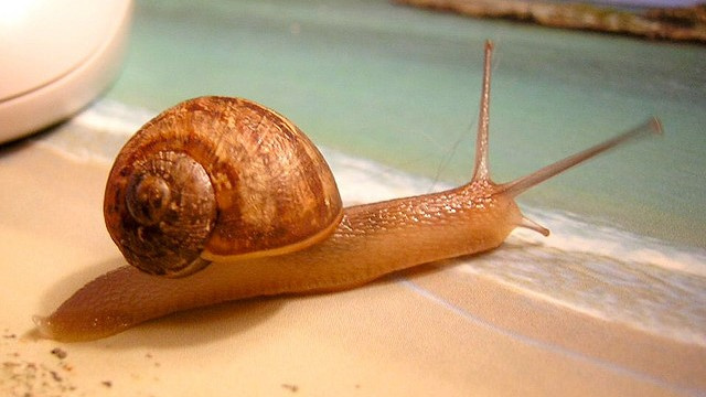 Our most traumatic memories could be erased, thanks to the marine snail