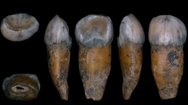 Scientists figure out how to test Neanderthals for left or right handedness