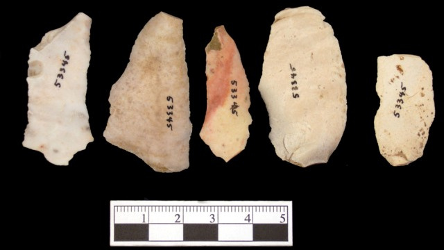 Stone tools shaped the evolution of our hands