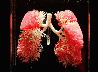 Breakthrough: The first functional, vat-grown lungs