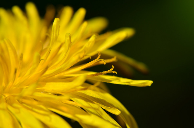 Shooting Challenge: Macro Gallery 2