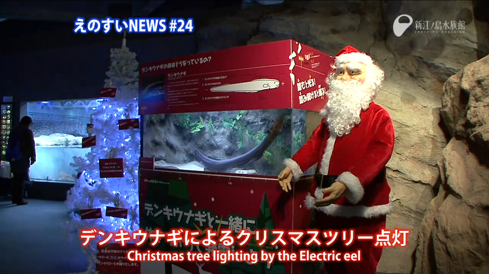 Electric Eel-Powered Christmas Trees Are Shockingly Better Than Yours