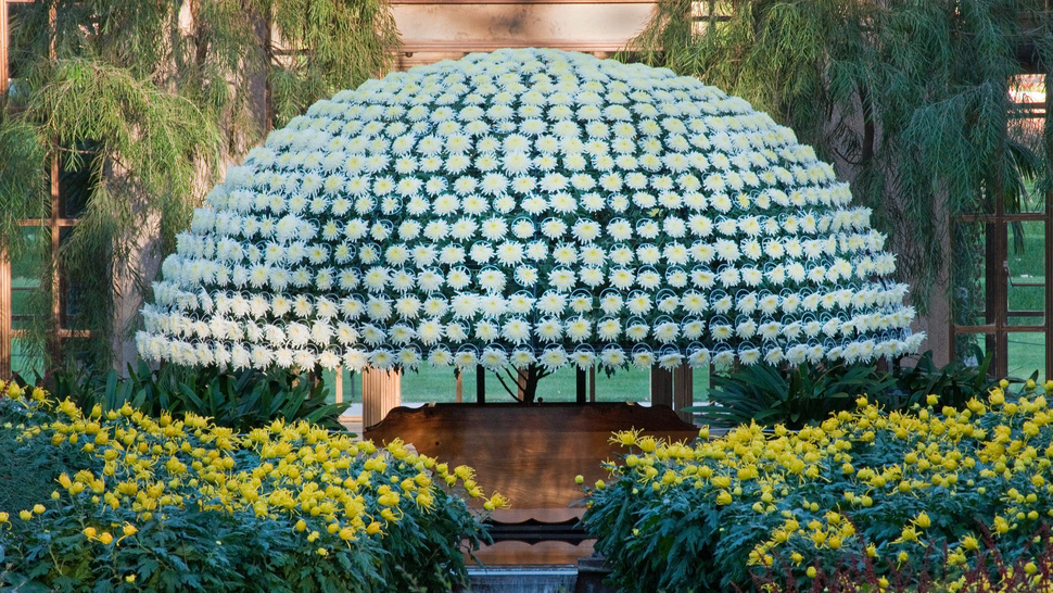 Watch How This 1000-Bloom Mega Flower Was Grown