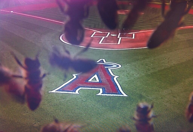 The Angels Game Was Delayed By Bees