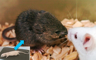 Scientists Clone Mouse from Damaged Frozen Cells, Mammoth, Sabertooth Next In Line