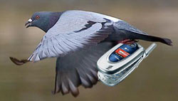 Cellphone-Smuggling Pigeons Are a Jailbird's Best Friend