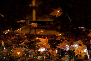 Ephemeral Autumn Gallery