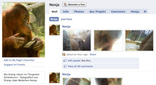 Orangutan Takes Photos, Shares Them on Facebook