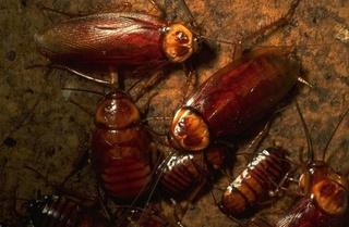 Remote-Controlled Roaches: The Next Front Line in Nuclear Defense