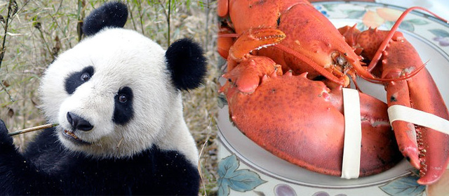 Pandas and Lobsters: Why Google Cannot Build Social Applications