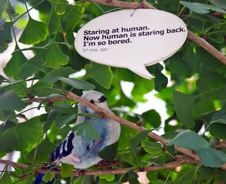 If Birds Could Tweet Using Twitter