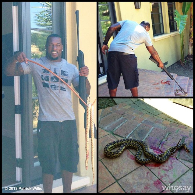 Trespassing Snake Brutally Murdered With Pellet Gun By Patrick …