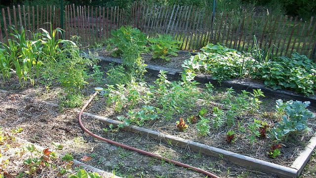 Choose The Best Money Saving Plants For Your Vegetable
