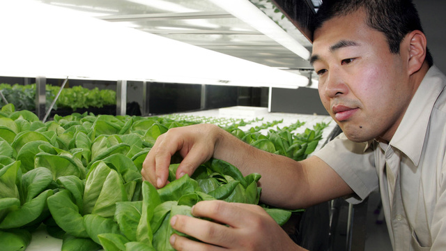 This Is The Future: 14 High-Tech Farms Where Veggies Grow Indoors