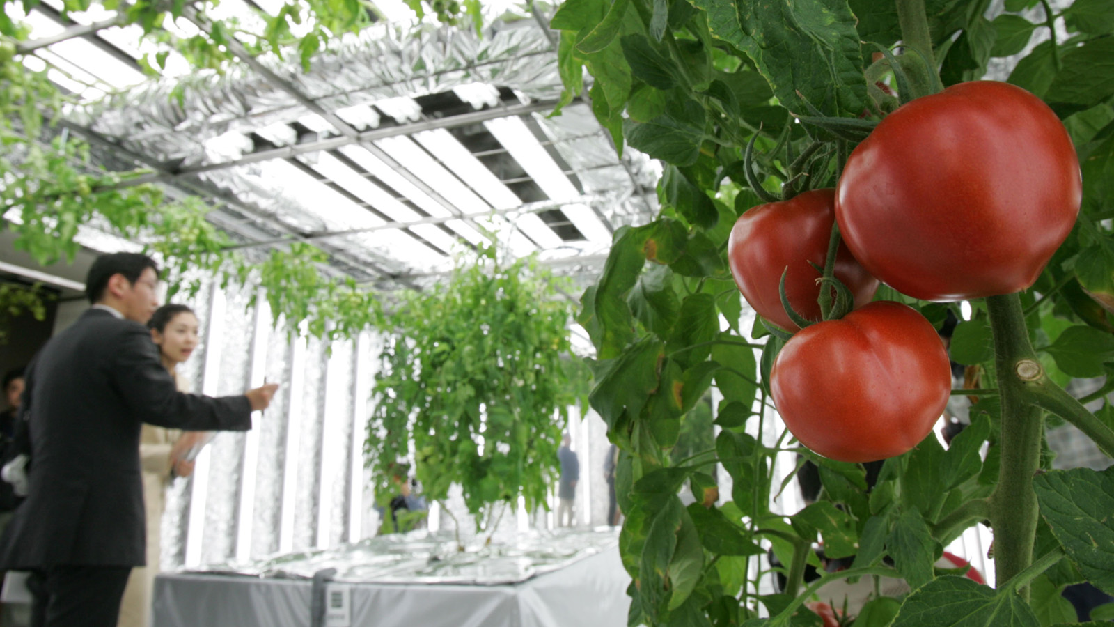 This Is The Future 14 High Tech Farms Where Veggies Grow