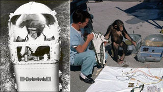 Animal Astronauts: The Unsung Heroes of Space Travel