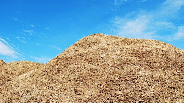 Pretty Soon Your Vanilla Flavoring Will Come From... Sawdust