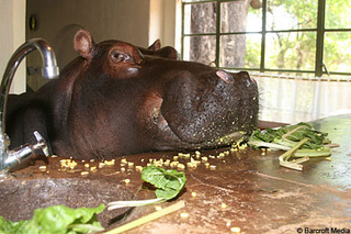 A Hippopotamus Isn't the Most Practical Family Pet I've Seen