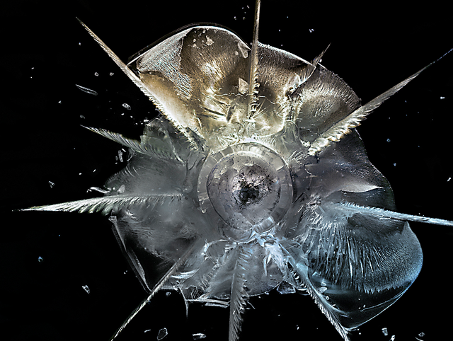 Exploding Bullets Frozen In Plexiglass Are Terrifyingly Beautiful