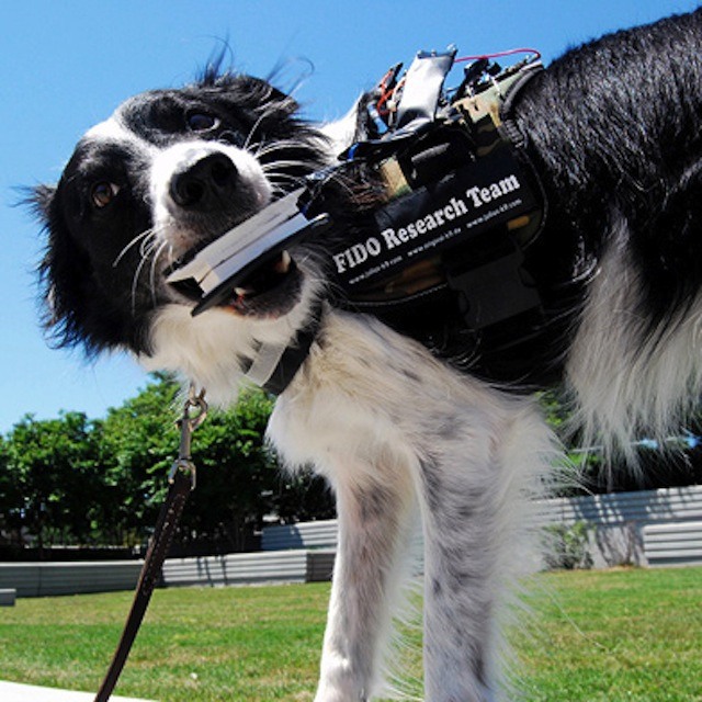 The inventor of Google Glass is designing a wearable computer for dogs
