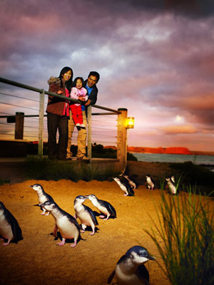 How one community brought these cute penguins back from extinction