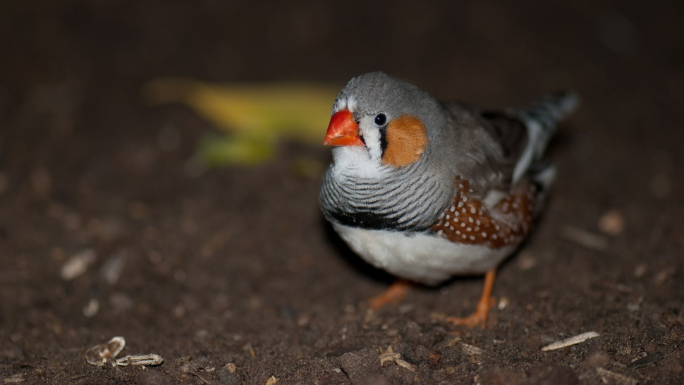 If teenage birds can't make friends, their love life is screwed