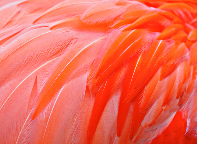 Neon Bird Feathers Hold the Key to Colors That Never Fade