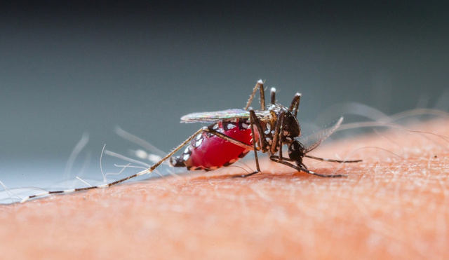 Scientists Have Created a Malaria Vaccine That's 100% Effective