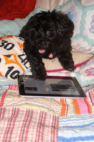 Why you should teach your dog to use an iPad