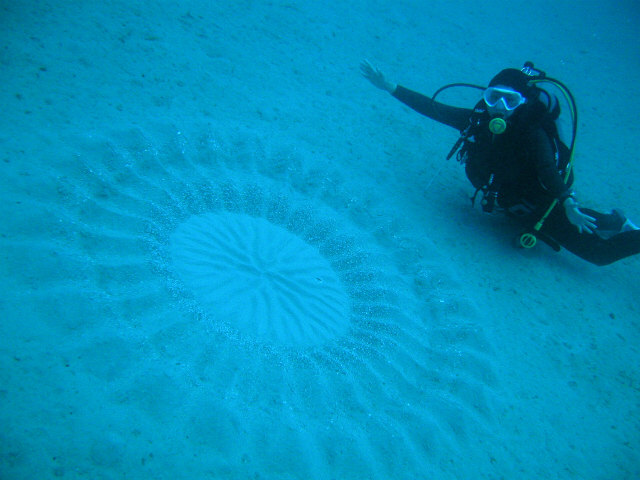 Japan 39 S Mysterious Underwater Circles Are Lovely Kotaku