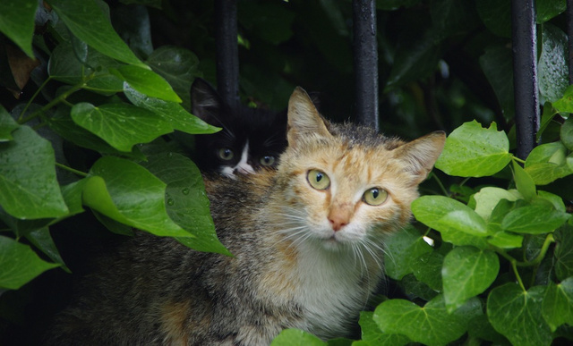 What's being done about all those damn feral cats?