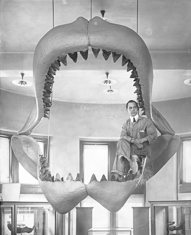 Rare Images Show How the Museum of Natural History Preps Its Displays
