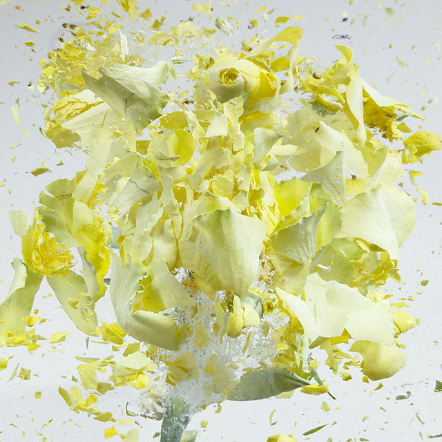 Flowers Shatter Like Glass Thanks to Liquid Nitrogen and an Air Gun