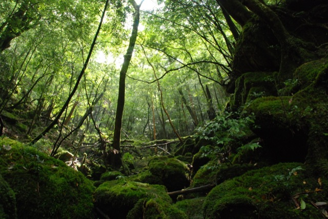 Visit the Real Princess Mononoke Forest