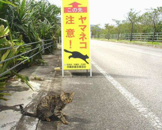Watch Out for Cats!